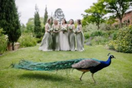 Peacock crashing a photo at Elsham hall wedding